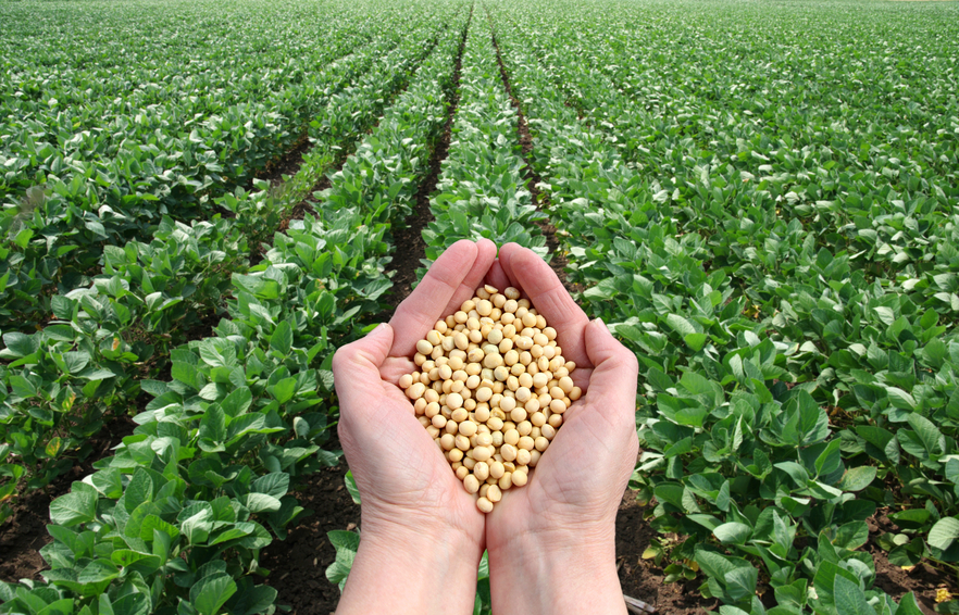 Soybean Futures Analysis